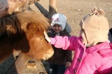 echitatie-ponei-calimanesti-caciulata